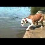¿El perro mas estupido del mundo?