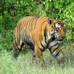 Tigre visita a horrorizados turistas