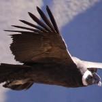 El mundo a vista de condor
