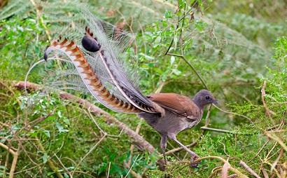 Precioso video de pajaros e insectos en Australia