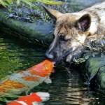 El mejor amigo de un perro es un pez