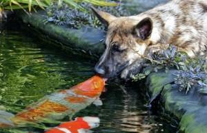 amistad perro pez