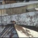 Cuervo esquiando surfeando en un tejado