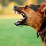 El encantador de perros – Cujo y Molly El caso mas agresivo