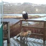 Todd el zorro y Mr Aguila en el porche