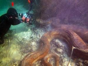 anaconda gigante submarina