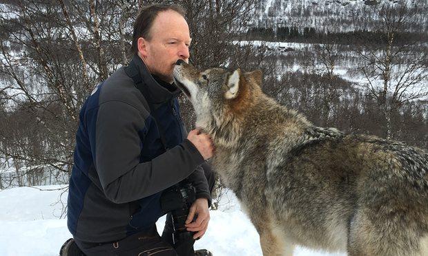 encuentro lobo salvaje