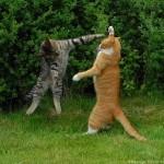 Mejor no te cruces con el gato jedi