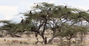 babuinos arbol