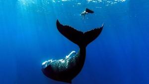 ballena buceadora