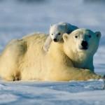 Madre oso polar y su cría en 3D