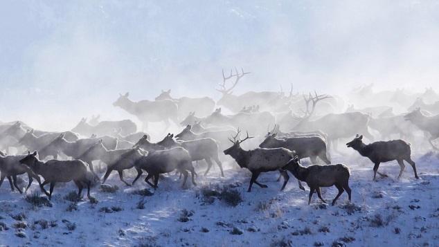 migraciones renos