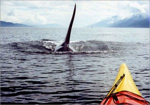 orca piragua