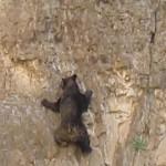 Osos escaladores en Santa Elena