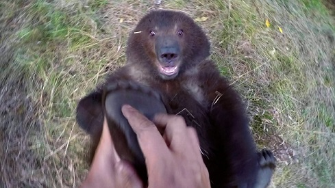 Jugando con Bella, la oso grizzly