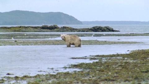 Documental – Aislados: Islas de frío