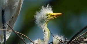 pajaros nido fotografia
