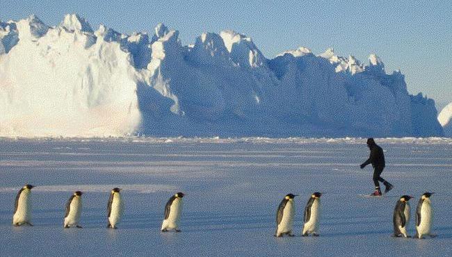 pinguinos patinando hielo