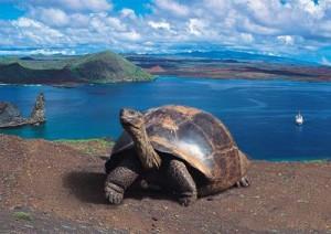 tortuga islas galapagos