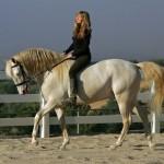 Montando caballos lusitanos