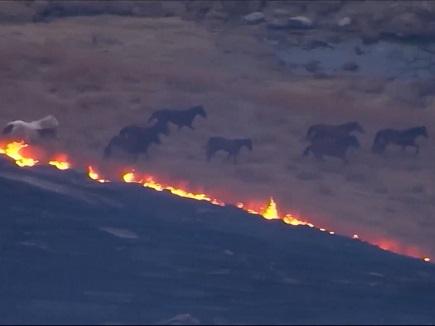 caballos huyendo del fuego