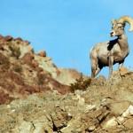Documental – El desierto de Sonora
