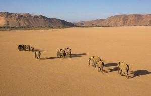 elefantes desierto namibia
