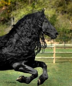 frederik el grande cabalgando caballo frison