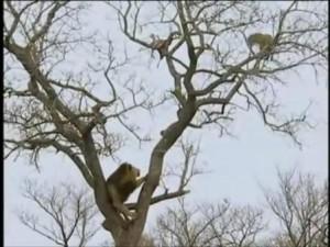 leopardo leon