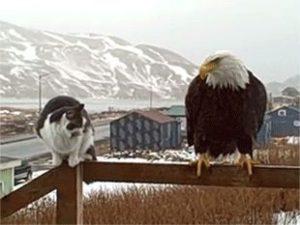 gizmo gato mrs eagle aguila alaska