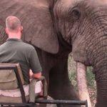 Encuentro muy cercano con un elefante