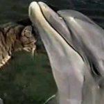 Gato y delfin jugando