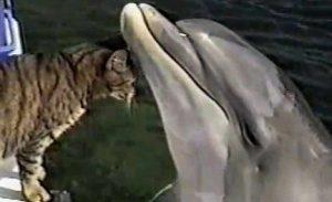 gato delfin