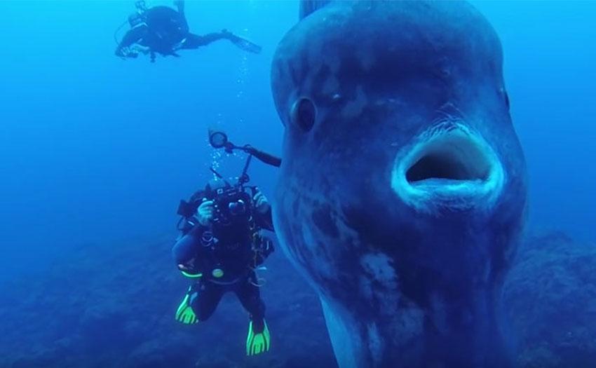 buceadores-pez-luna