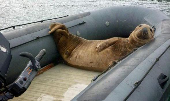 foca-barco
