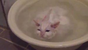 gatito-bano