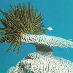 Los lirios de mar