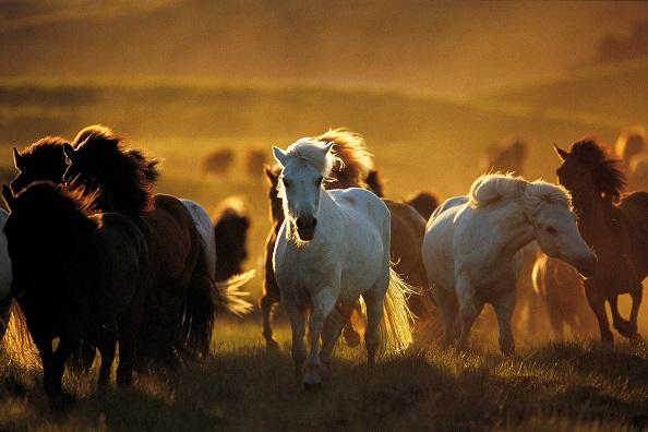 caballos-galopando