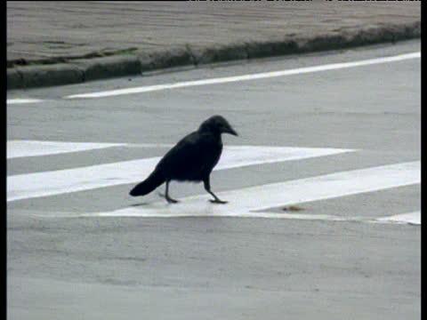 Cuervos rompen nueces con la ayuda de coches