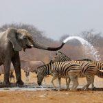Documental – Africa extrema. Etosha el gran lugar blanco