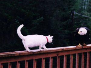 gato-aguila