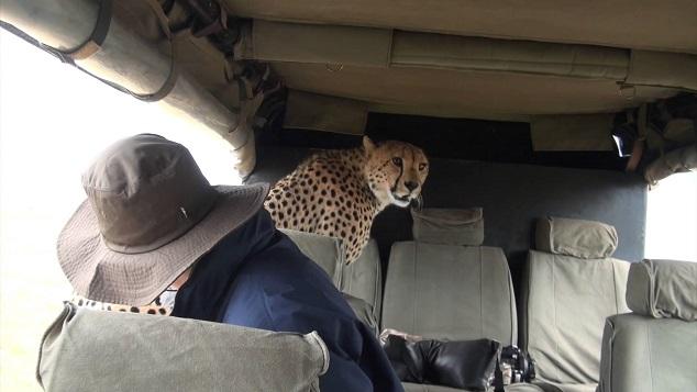 guepardo-coche-masai-mara