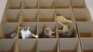 muchos-gatos-muchas-cajas