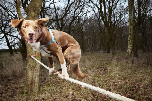 perro-acrobata