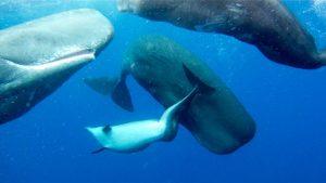 cachalotes delfin