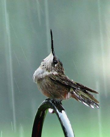 Hermoso colibri dandose un baño de lluvia