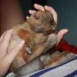 ¿Mimando a un conejo?