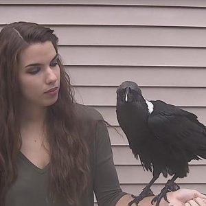cuervo-hablando