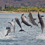 Genial vídeo de delfines giradores haciendo de las suyas