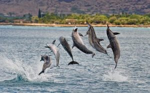 delfines giradores